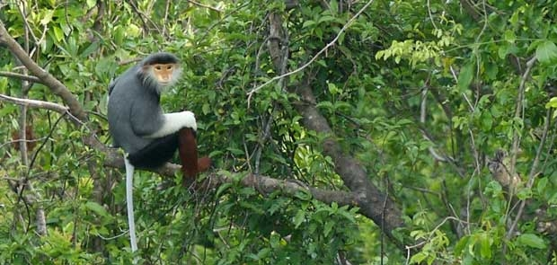 New hope for Vietnam's forests