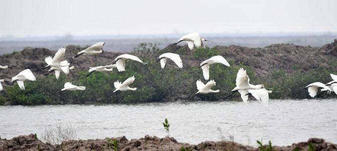 Chào đón chim di cư – Việt Nam 2015