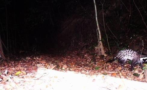 Ghi nhận hai loài cầy và nhiều loài động vật quý hiếm tại KBTTN Phong Điền, Thừa Thiên Huế