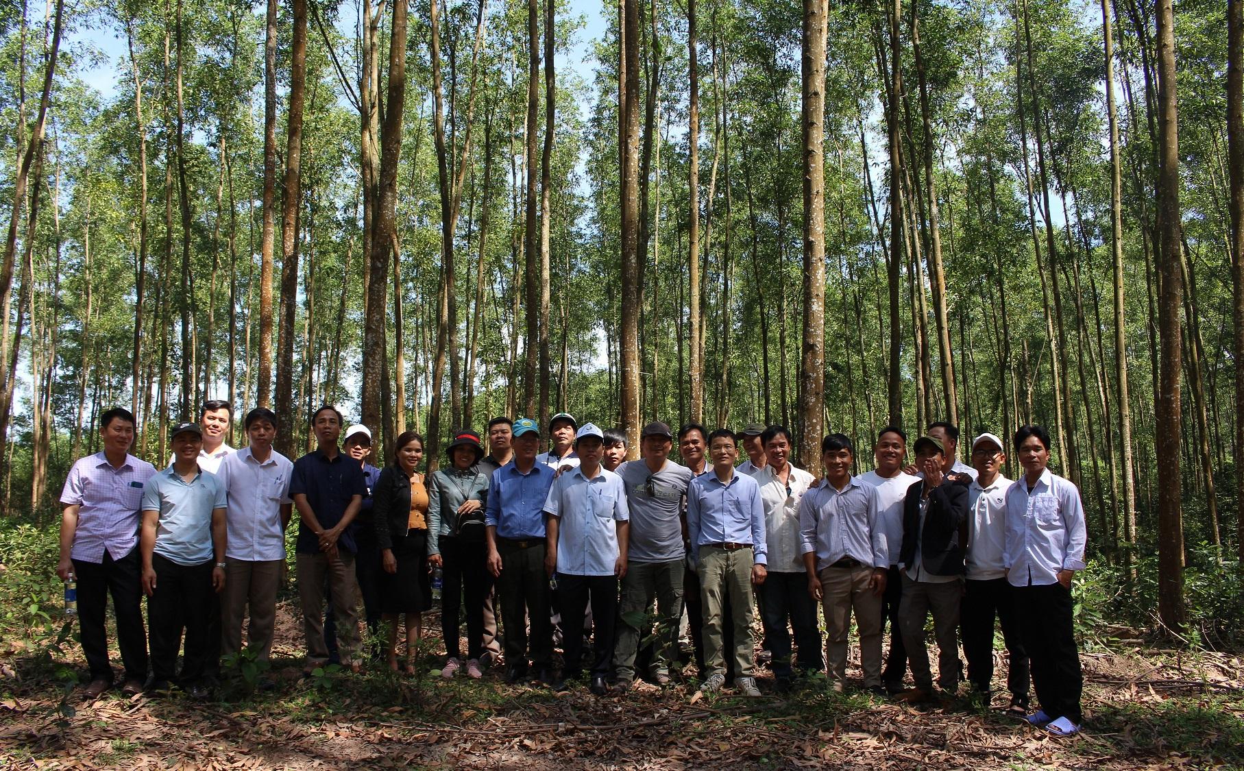 (Tiếng Việt) Chuyến tham quan học tập về trồng rừng gỗ lớn và thành lập hợp tác xã Lâm nghiệp bền vững với TTH-FOSDA